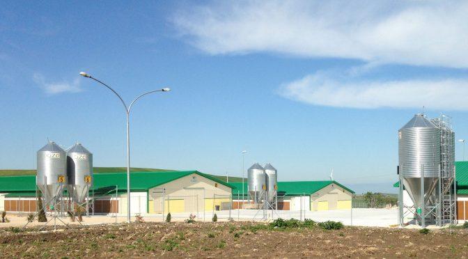Biogas ed allevamento avicolo: integrazione fruttuosa?